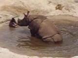 Farting Rhino!