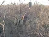 Guy Kicking A Javelina While Hunting