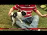 11-year-old Reunited With Missing Therapy Dog