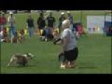 3-legged Dog Inspires At Disc Competition