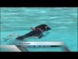 Annual Dog Swim Today In Springfield