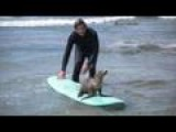 A Surfer Had A Surprise Hitchhiker On His Board