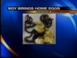 Boy Brings Home Eggs And Poisonous Snakes Hatch!