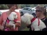 Blessing Animals In Honor Of Saint Francis