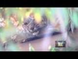 Bobcat Sighting In Oildale