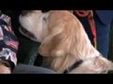 Blind Service Dog Continues To Give