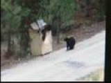 Couple Helps Save Bears From Trash Bin