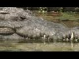 Crocodile Eats Go Pro Camera