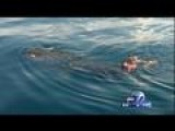 Captain Satisfies Life-long Goal In Swim With Whale Shark