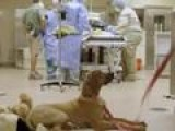 Cute Cheetah Cub Has Surgery With Puppy Pal By His Side