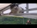 Cat Goes For Surprise Flight