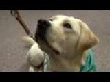 Charlie The K9 Advocate Dog