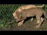 Cheetah And Pup Form Fast Friendship