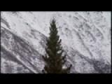 Capitol Christmas Tree From Alaska