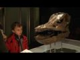 Dinosaur Exhibition Opens In Paris