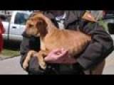 Deputy Gives Tornado Puppy A New Home