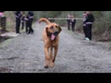 Dog Accidentally Runs Half Marathon