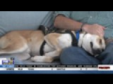 Disabled Veteran Improves Life With Service Dog
