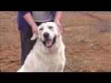 Dog Injured In Tornado Returns Home
