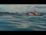 Florida Man Rides Whale Shark