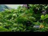 Fate Of Marijuana Sales Tax Money Is Hazy