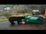 Family Dog Tangles With Bear