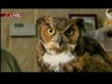 GDW6 Larry The Owl