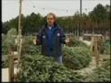 Garden Guy - Recycling Your Christmas Tree