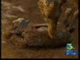 Giraffe Baby Boy Born At Santa Barbara Zoo