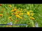 Green Thumbs: Planting Perennials