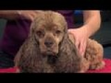Holidays: Picking The Right Doggie Daycare