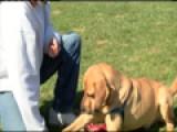 Happy Hounds Prison Dog Program