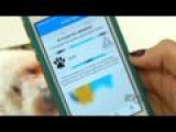Iphone App To Help Reunite Owners With Lost Pets