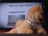Internet Sensation Jiff: The Fastest Dog On Two Legs