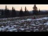 Iditarod Begins With Lack Of Snow