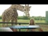 Keeping Exotic Animals Cool In The Ozarks Summer