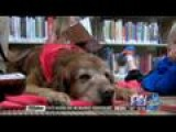 Library Program Uses Man's Best Friend To Boost Confidence