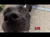 Last Dog At Old Macon-Bibb Animal Welfare Center Finds A Hom