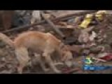 Local Search Dogs Searching For Earthquake Victims In Nepal