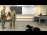 Military Dog Nmu