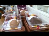 Newborns Dressed As Turkeys