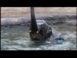 Oregon Zoo Celebrates B-day Of Its Youngest Asian Elephant