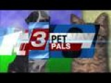 October 29 Is National Cat Day. Pet Pals Helps Celebrate
