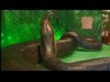 One Tank Trip: Titanoboa Monster Snake