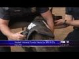 Organizations Donate Protective Vests To K9s In MN