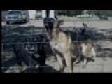 Pack Of Dogs Kill Next Door Pet Owner Blames Neighbor