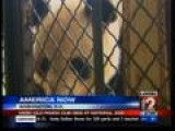Panda Cub At Smithsonian's National Zoo Dies