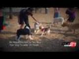 Pet Tips: Dog Park Etiquette