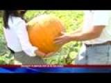Pumpkin Patch Bigger Than Ever