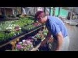 Patrick's Garden: Buying Flowers For The Yard